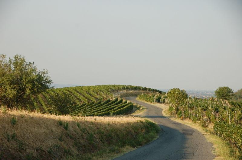 colline-territorio-brachetto